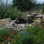 Elizabeth Bublitz – Pet Friendly Landscaping