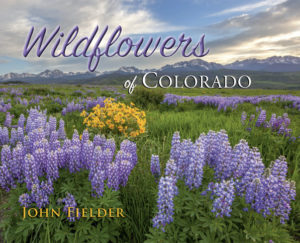 wildflower-cover